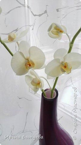 Несколько орхидей, в разных цветах фото 8