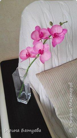 Несколько орхидей, в разных цветах фото 2