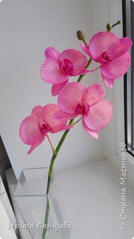 Несколько орхидей, в разных цветах фото 1