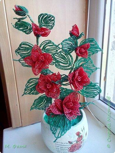 Кустик бисерных роз