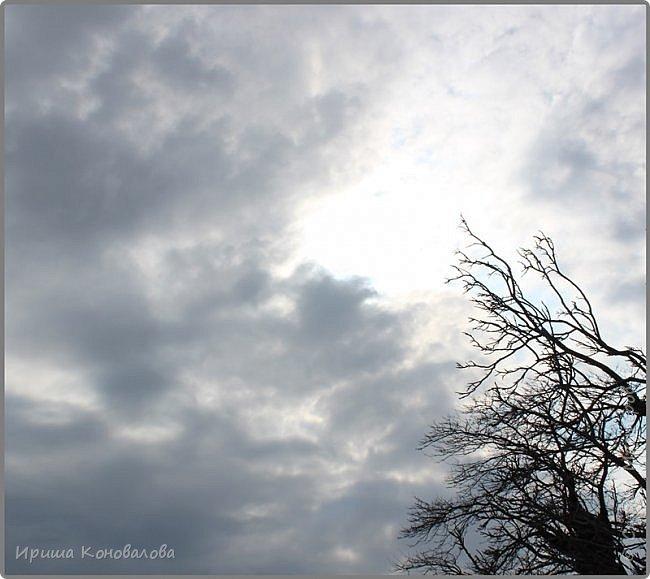 Добрый вечер, дорогие чудесники. Предлагаю к просмотру еще несколько фото. Съемки делала в первых числах апреля. Здесь цветение началось в феврале. Но деревья и кустарники зацветают не сразу, а по очереди. И до середины апреля часть деревьев стоит вообще без зелени. фото 17
