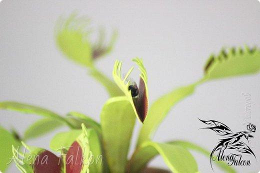 Представляю Вам новую работу. Венерина мухоловка. Сам цветок, земля в горшке и муха в одной из ловушек выполнены из фоамирана.  фото 2
