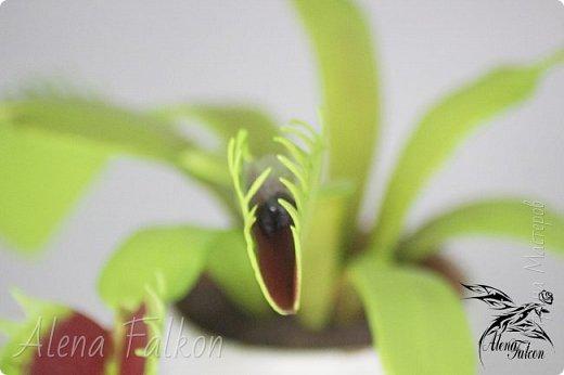 Представляю Вам новую работу. Венерина мухоловка. Сам цветок, земля в горшке и муха в одной из ловушек выполнены из фоамирана.  фото 5