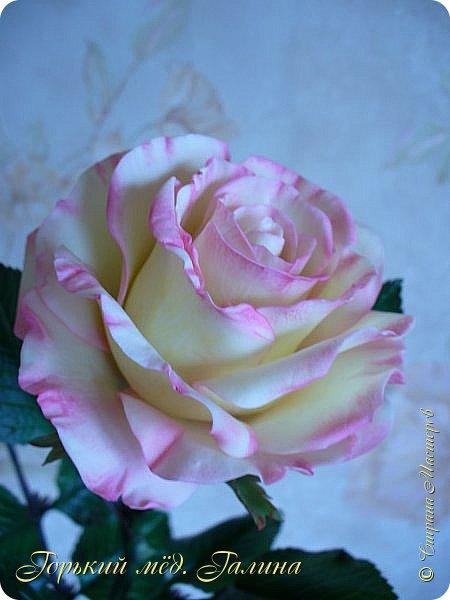 Всем доброго времени суток!) Сегодня я с очередными розами, фотографий много). Хотелось показать со всех ракурсов очередные творения очумелых ручек)  Белая роза. На самом деле она не совсем белая, добавила к белилам совсем капельку лимонно-желтого для еле заметного оттенка. Если лепить только с белилами получается не естественный цвет. Общая высота примерно 58 см, форма бутона - полураскрытый.  фото 16