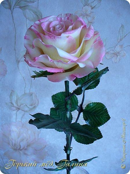 Всем доброго времени суток!) Сегодня я с очередными розами, фотографий много). Хотелось показать со всех ракурсов очередные творения очумелых ручек)  Белая роза. На самом деле она не совсем белая, добавила к белилам совсем капельку лимонно-желтого для еле заметного оттенка. Если лепить только с белилами получается не естественный цвет. Общая высота примерно 58 см, форма бутона - полураскрытый.  фото 17