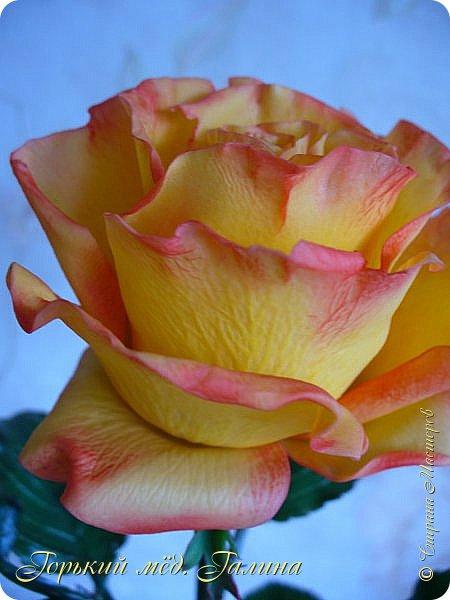 Всем доброго времени суток!) Сегодня я с очередными розами, фотографий много). Хотелось показать со всех ракурсов очередные творения очумелых ручек)  Белая роза. На самом деле она не совсем белая, добавила к белилам совсем капельку лимонно-желтого для еле заметного оттенка. Если лепить только с белилами получается не естественный цвет. Общая высота примерно 58 см, форма бутона - полураскрытый.  фото 27