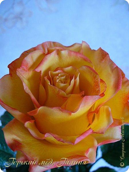 Всем доброго времени суток!) Сегодня я с очередными розами, фотографий много). Хотелось показать со всех ракурсов очередные творения очумелых ручек)  Белая роза. На самом деле она не совсем белая, добавила к белилам совсем капельку лимонно-желтого для еле заметного оттенка. Если лепить только с белилами получается не естественный цвет. Общая высота примерно 58 см, форма бутона - полураскрытый.  фото 28