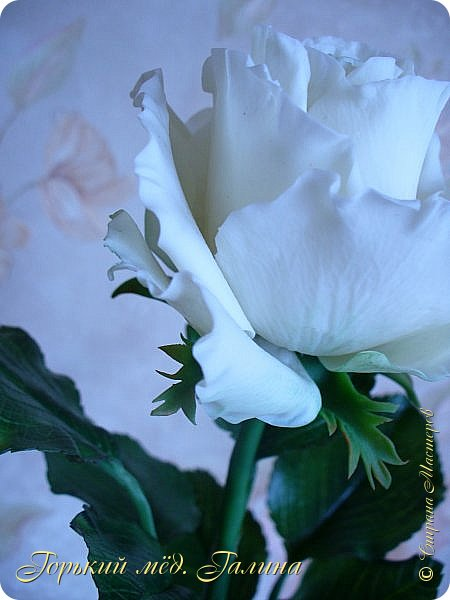 Всем доброго времени суток!) Сегодня я с очередными розами, фотографий много). Хотелось показать со всех ракурсов очередные творения очумелых ручек)  Белая роза. На самом деле она не совсем белая, добавила к белилам совсем капельку лимонно-желтого для еле заметного оттенка. Если лепить только с белилами получается не естественный цвет. Общая высота примерно 58 см, форма бутона - полураскрытый.  фото 5