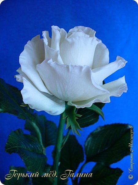 Всем доброго времени суток!) Сегодня я с очередными розами, фотографий много). Хотелось показать со всех ракурсов очередные творения очумелых ручек)  Белая роза. На самом деле она не совсем белая, добавила к белилам совсем капельку лимонно-желтого для еле заметного оттенка. Если лепить только с белилами получается не естественный цвет. Общая высота примерно 58 см, форма бутона - полураскрытый.  фото 2