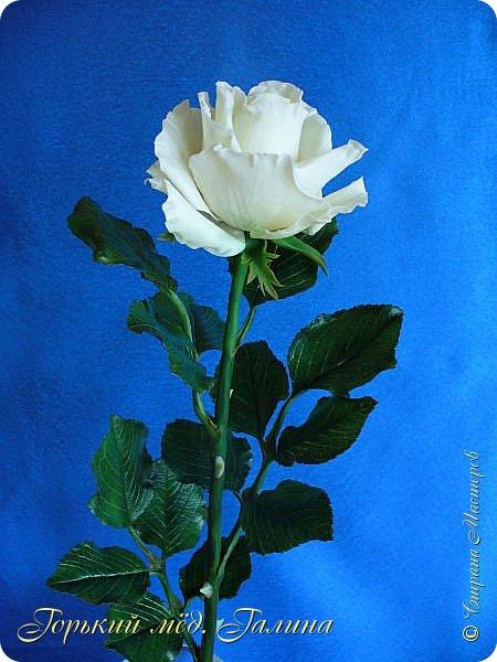Всем доброго времени суток!) Сегодня я с очередными розами, фотографий много). Хотелось показать со всех ракурсов очередные творения очумелых ручек)  Белая роза. На самом деле она не совсем белая, добавила к белилам совсем капельку лимонно-желтого для еле заметного оттенка. Если лепить только с белилами получается не естественный цвет. Общая высота примерно 58 см, форма бутона - полураскрытый.  фото 1