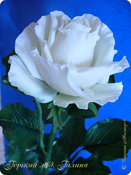 Всем доброго времени суток!) Сегодня я с очередными розами, фотографий много). Хотелось показать со всех ракурсов очередные творения очумелых ручек)  Белая роза. На самом деле она не совсем белая, добавила к белилам совсем капельку лимонно-желтого для еле заметного оттенка. Если лепить только с белилами получается не естественный цвет. Общая высота примерно 58 см, форма бутона - полураскрытый.  фото 3