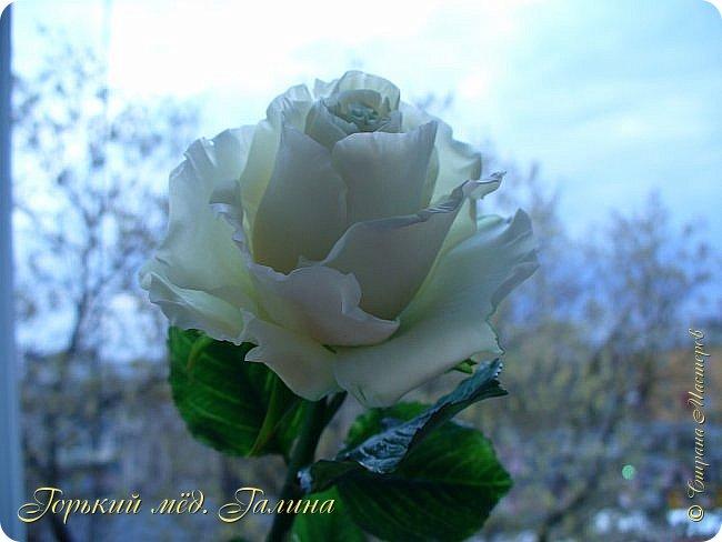 Всем доброго времени суток!) Сегодня я с очередными розами, фотографий много). Хотелось показать со всех ракурсов очередные творения очумелых ручек)  Белая роза. На самом деле она не совсем белая, добавила к белилам совсем капельку лимонно-желтого для еле заметного оттенка. Если лепить только с белилами получается не естественный цвет. Общая высота примерно 58 см, форма бутона - полураскрытый.  фото 13
