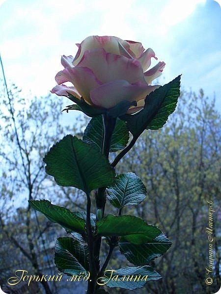 Всем доброго времени суток!) Сегодня я с очередными розами, фотографий много). Хотелось показать со всех ракурсов очередные творения очумелых ручек)  Белая роза. На самом деле она не совсем белая, добавила к белилам совсем капельку лимонно-желтого для еле заметного оттенка. Если лепить только с белилами получается не естественный цвет. Общая высота примерно 58 см, форма бутона - полураскрытый.  фото 21
