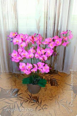 Моя большая орхидея фото 1