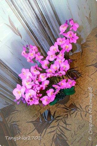 Моя большая орхидея фото 2
