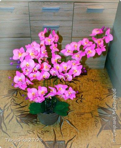Моя большая орхидея фото 3