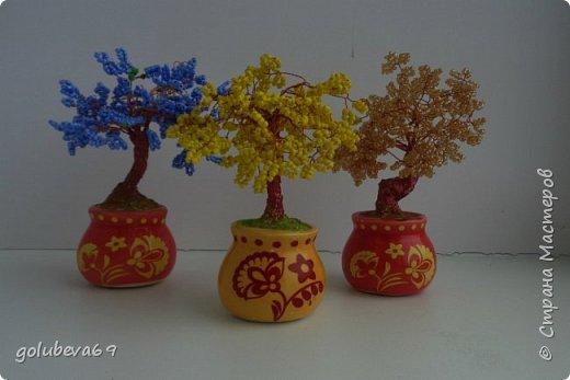 Наши новые деревца. фото 1