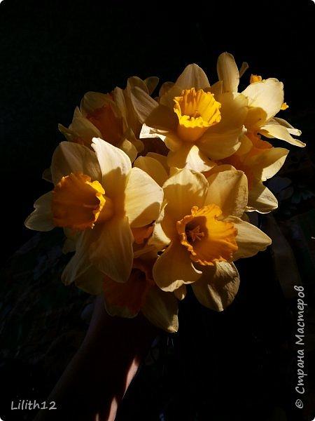 По семейным обстоятельствам пришлось провести месяц в г.Таганроге. И да, весна на юге куда интереснее нашей тюменской весны. На фото то, что мне удалось запечатлеть на память. Эта красота от пробуждения природы от зимнего сна. Крокусы, подснежники этого региона, одни из первых цветов, что мне удалось созерцать... фото 5