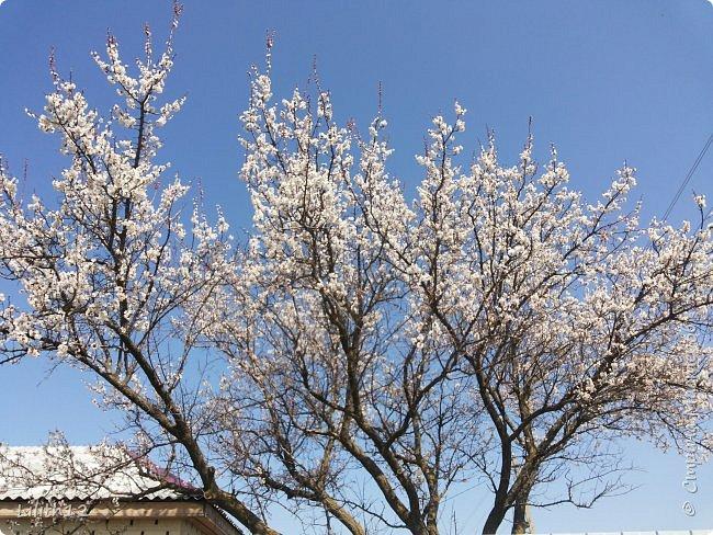 По семейным обстоятельствам пришлось провести месяц в г.Таганроге. И да, весна на юге куда интереснее нашей тюменской весны. На фото то, что мне удалось запечатлеть на память. Эта красота от пробуждения природы от зимнего сна. Крокусы, подснежники этого региона, одни из первых цветов, что мне удалось созерцать... фото 20