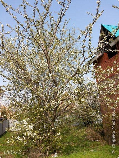 По семейным обстоятельствам пришлось провести месяц в г.Таганроге. И да, весна на юге куда интереснее нашей тюменской весны. На фото то, что мне удалось запечатлеть на память. Эта красота от пробуждения природы от зимнего сна. Крокусы, подснежники этого региона, одни из первых цветов, что мне удалось созерцать... фото 22