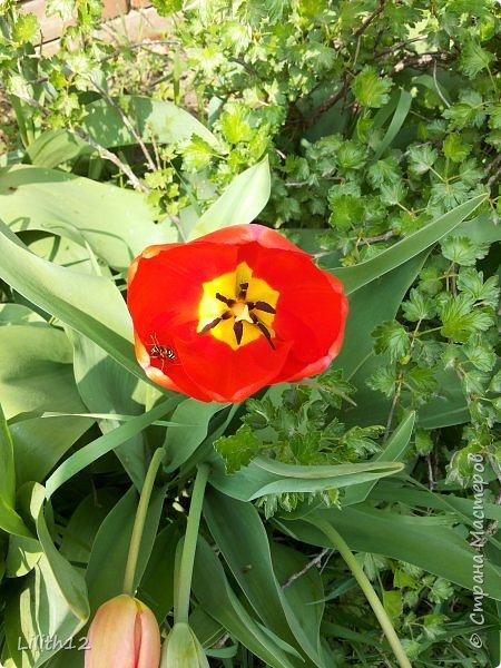 По семейным обстоятельствам пришлось провести месяц в г.Таганроге. И да, весна на юге куда интереснее нашей тюменской весны. На фото то, что мне удалось запечатлеть на память. Эта красота от пробуждения природы от зимнего сна. Крокусы, подснежники этого региона, одни из первых цветов, что мне удалось созерцать... фото 12