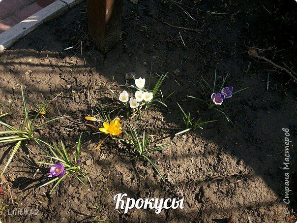 По семейным обстоятельствам пришлось провести месяц в г.Таганроге. И да, весна на юге куда интереснее нашей тюменской весны. На фото то, что мне удалось запечатлеть на память. Эта красота от пробуждения природы от зимнего сна. Крокусы, подснежники этого региона, одни из первых цветов, что мне удалось созерцать... фото 1