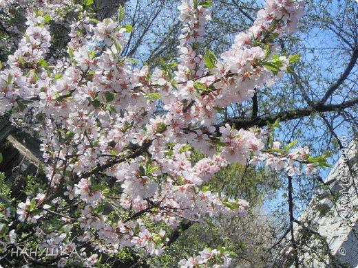 ВСЕМ ДОБРОГО,СОЛНЕЧНОГО,РАДОСТНОГО ВЕСЕННЕГО ДНЯ!!!У нас весна шагает семимильными шагами,каждый день происходит чудо,все цветет,все благоухает.На улице  цветочный рай.Абрикоса и вишня,персик и яблоня радуют нас своим обильным цветением.Цветы на любой цвет и вкус)))И приходит вдохновения творить тоже красоту и радовать себя и вас мои дорогие коллеги.Сплелась у меня шкатулка. фото 13