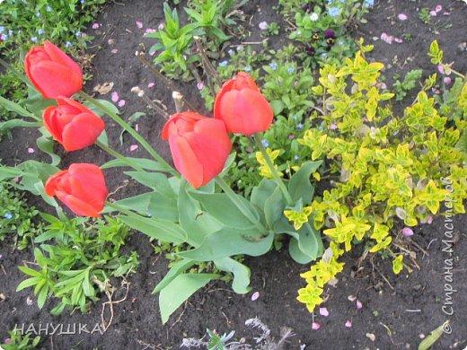 ВСЕМ ДОБРОГО,СОЛНЕЧНОГО,РАДОСТНОГО ВЕСЕННЕГО ДНЯ!!!У нас весна шагает семимильными шагами,каждый день происходит чудо,все цветет,все благоухает.На улице  цветочный рай.Абрикоса и вишня,персик и яблоня радуют нас своим обильным цветением.Цветы на любой цвет и вкус)))И приходит вдохновения творить тоже красоту и радовать себя и вас мои дорогие коллеги.Сплелась у меня шкатулка. фото 12