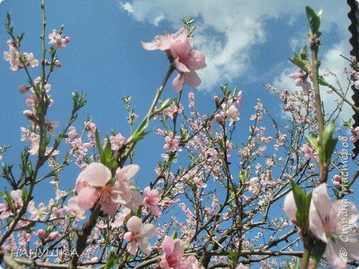 ВСЕМ ДОБРОГО,СОЛНЕЧНОГО,РАДОСТНОГО ВЕСЕННЕГО ДНЯ!!!У нас весна шагает семимильными шагами,каждый день происходит чудо,все цветет,все благоухает.На улице  цветочный рай.Абрикоса и вишня,персик и яблоня радуют нас своим обильным цветением.Цветы на любой цвет и вкус)))И приходит вдохновения творить тоже красоту и радовать себя и вас мои дорогие коллеги.Сплелась у меня шкатулка. фото 14