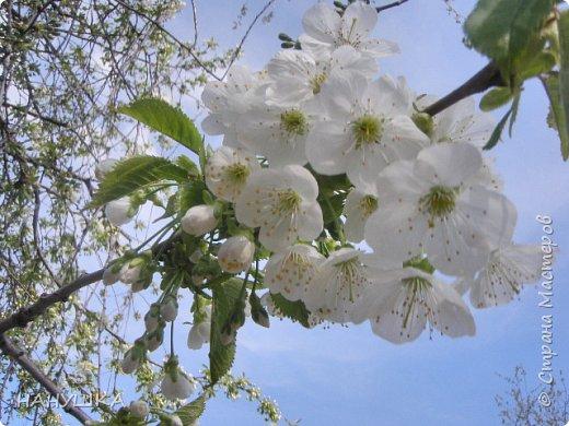 ВСЕМ ДОБРОГО,СОЛНЕЧНОГО,РАДОСТНОГО ВЕСЕННЕГО ДНЯ!!!У нас весна шагает семимильными шагами,каждый день происходит чудо,все цветет,все благоухает.На улице  цветочный рай.Абрикоса и вишня,персик и яблоня радуют нас своим обильным цветением.Цветы на любой цвет и вкус)))И приходит вдохновения творить тоже красоту и радовать себя и вас мои дорогие коллеги.Сплелась у меня шкатулка. фото 16
