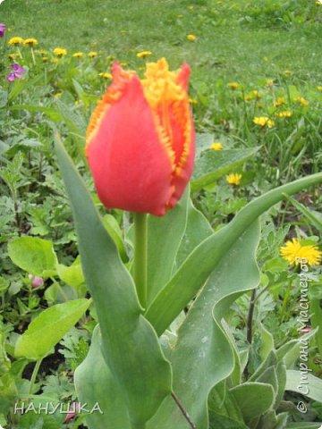 ВСЕМ ДОБРОГО,СОЛНЕЧНОГО,РАДОСТНОГО ВЕСЕННЕГО ДНЯ!!!У нас весна шагает семимильными шагами,каждый день происходит чудо,все цветет,все благоухает.На улице  цветочный рай.Абрикоса и вишня,персик и яблоня радуют нас своим обильным цветением.Цветы на любой цвет и вкус)))И приходит вдохновения творить тоже красоту и радовать себя и вас мои дорогие коллеги.Сплелась у меня шкатулка. фото 18
