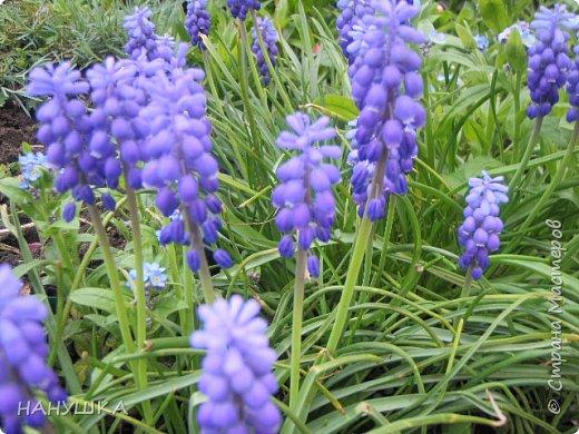ВСЕМ ДОБРОГО,СОЛНЕЧНОГО,РАДОСТНОГО ВЕСЕННЕГО ДНЯ!!!У нас весна шагает семимильными шагами,каждый день происходит чудо,все цветет,все благоухает.На улице  цветочный рай.Абрикоса и вишня,персик и яблоня радуют нас своим обильным цветением.Цветы на любой цвет и вкус)))И приходит вдохновения творить тоже красоту и радовать себя и вас мои дорогие коллеги.Сплелась у меня шкатулка. фото 15