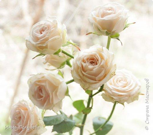 Девочки,немного предистории создания данной композиции.Шла на днях мимо цветочных ларьков и увидела веточки чайной розы и не смогла пройти мимо.Купила одну веточку,дома аккуратно срезала один цветочек,разобрала,постаралась пофторить цвет,форму и изгибы лепестков, собрала и прикрепила на веточку(фото будет ниже) Ну а потом налепила еще таких розочек и составила такую вот композицию с земляникой,бутонами пионов и вероникой) фото 4