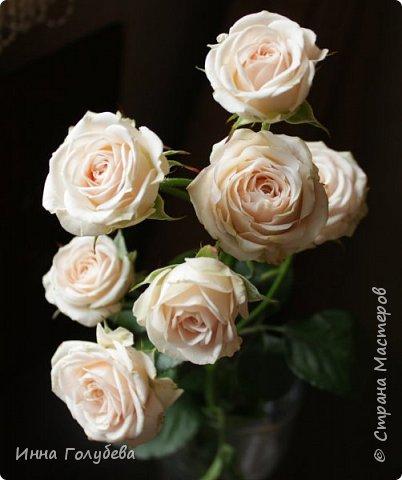 Девочки,немного предистории создания данной композиции.Шла на днях мимо цветочных ларьков и увидела веточки чайной розы и не смогла пройти мимо.Купила одну веточку,дома аккуратно срезала один цветочек,разобрала,постаралась пофторить цвет,форму и изгибы лепестков, собрала и прикрепила на веточку(фото будет ниже) Ну а потом налепила еще таких розочек и составила такую вот композицию с земляникой,бутонами пионов и вероникой) фото 5