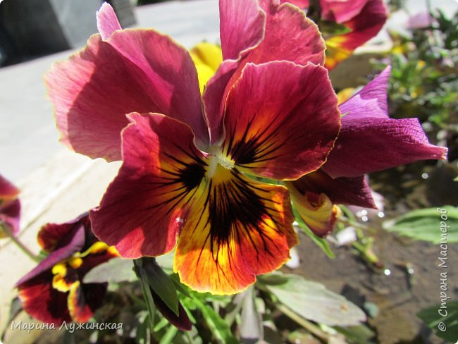 Крымский апрель - красавчик!!!!  Радует нас теплой погодкой, разнообразными цветочками и их невероятными ароматами!!!!  Очень хочеться остановить это апрельское мгновение, но так как это невозможно, запечатляем всё, что только можно, на фотоаппарат и сохраняем в любимой Стране Мастеров....  Это зацвела позавчера у нас во дворе красотка -сирень.... фото 35