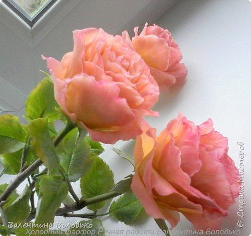 Здравствуйте дорогие жители Страны Мастеров.Розомания продолжается.На сей раз полноразмерные розы. фото 8