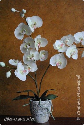 Всем доброго времени суток! Радости нет предела! Закончила орхидею!!! Она получилась такая красивая, сама не ожидала. Высота цветка 60 см. Орхидейка сделана ко дню рождения. Я думаю, понравится. фото 1