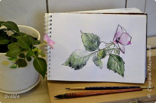 Видео мастер-класс: как нарисовать цветок с натуры двумя способами фото 1
