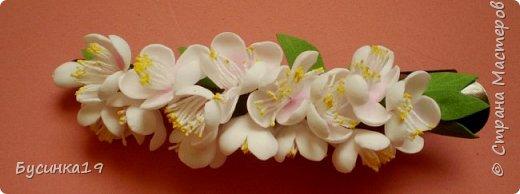 Вишня цветет фото 1