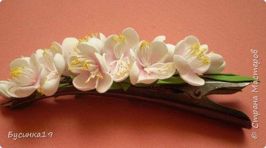 Вишня цветет фото 2