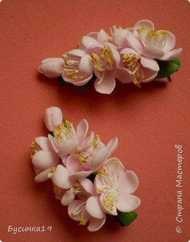 Вишня цветет фото 4
