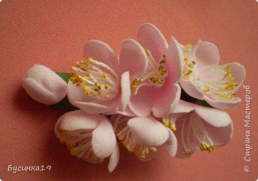 Вишня цветет фото 6
