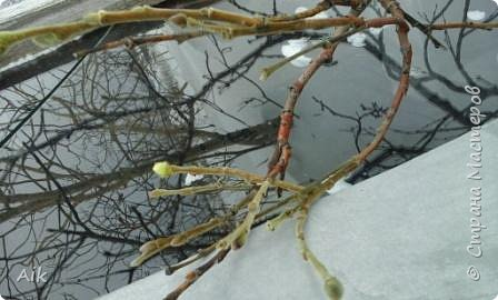 Здравствуйте Всем! С Вербным Воскресением Вас! Мира и Добра в Ваши дома! я к Вам с весенней северной зарисовкой... у всех своя весна: где-то цветут цветы, а у нас вот не тают льды :-)  фото 2