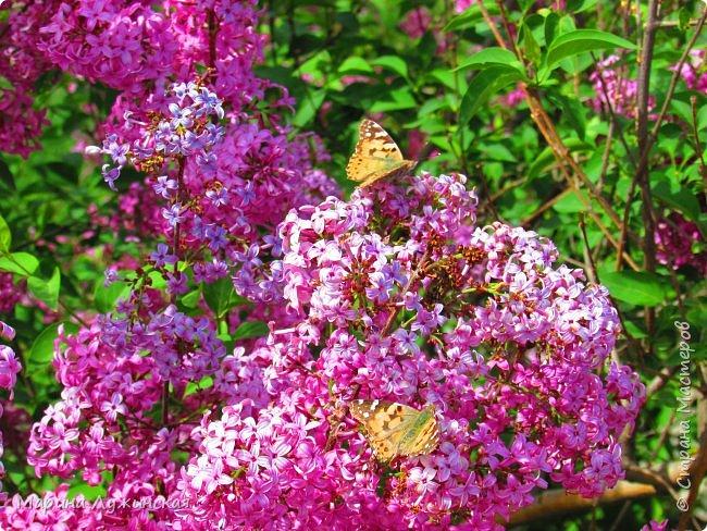 Добрый день!   У нас выдался тёплый, спокойный весенний денёк....  фото 19
