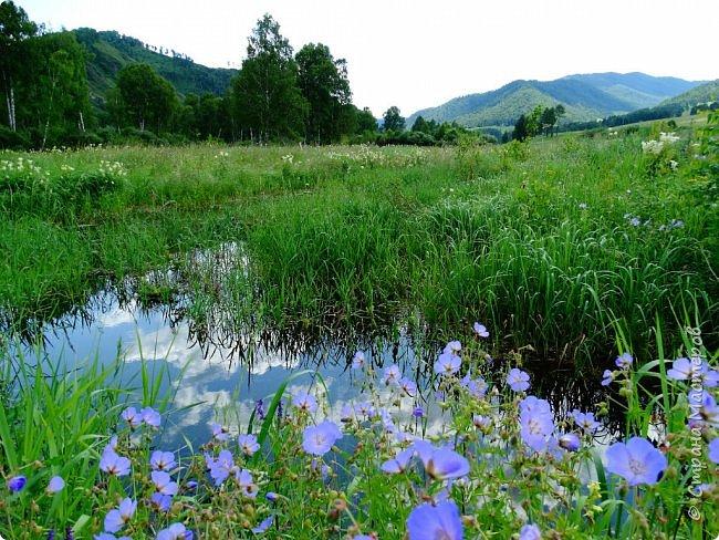 Добрый день всем! Сегодня мы отправимся на новую экскурсию по Горному Алтаю. фото 1