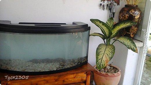 Тумба под аквариум фото 2