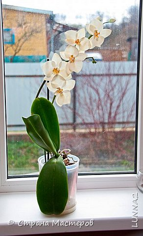 Мои первые подхваты (цветы) из фоамирана. Подхват-косичка был куплен в магазине, а цветочком решила дополнить. фото 11
