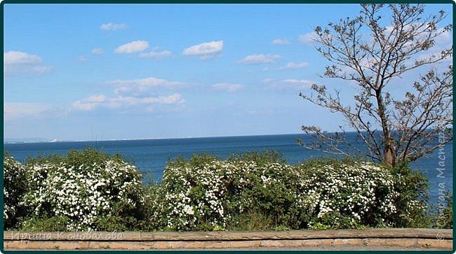 Добрый вечер, предлагаю для просмотра еще фотографии цветущего парка, Прогулка состоялась где-то 15 апреля. Весь парк в цветущих розовых и желтых деревьях. Розовый это индийский люляк. Болгары называют его иудой. А желтая и белая - глицинии (если не ошибаюсь). Еще не отцвели тюльпаны. фото 15