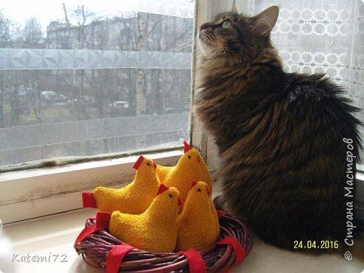 Добрый день! Только недавно выставила своих курочек напоказ (http://stranamasterov.ru/node/1013644) и вот вам результат! Кто- напророчил... Мои курочки принесли вот таких цыпляток. Красота! Такие яркие, шустрые. фото 7