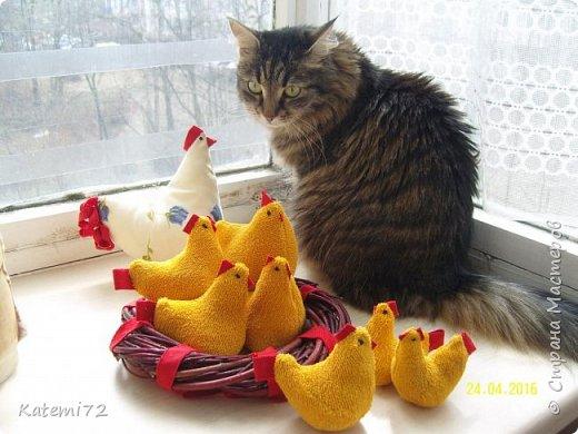 Добрый день! Только недавно выставила своих курочек напоказ (http://stranamasterov.ru/node/1013644) и вот вам результат! Кто- напророчил... Мои курочки принесли вот таких цыпляток. Красота! Такие яркие, шустрые. фото 9
